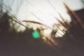 stock photo of grass  - An Daisy Against Vivid Green Grass  - JPG