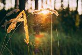 pic of dry grass  - Dry Green Grass Field In Sunset Sunlight - JPG