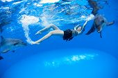 pic of dolphins  - Girl under water communicates and with the dolphins - JPG