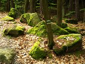 picture of lichenes  - Boulders in the woods among the trees covered with moss and lichen - JPG