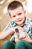 pic of lap  - Happy child petting a duck in his lap - JPG