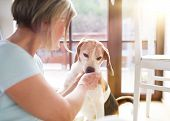 foto of dog-house  - Senior woman with her dog inside of her house.