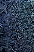 foto of ice crystal  - close up of blue ice crystals forming spiky ornaments - JPG