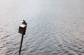 picture of water bird  - Seabird resting on a bird house placed in the water - JPG