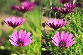stock photo of f22  - two different photos of some purple flowers shot with different apertures - JPG