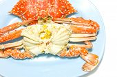 foto of crab  - Boiled crabs prepared on plate. Boiled crabs sea food.