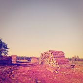 pic of afforestation  - Logging in the Forest at Sunset Vintage Style Toned Picture - JPG