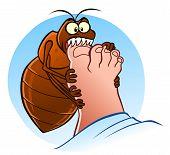 foto of parasite  - Hungry bedbug biting human - JPG