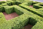 Mini Hedge Maze