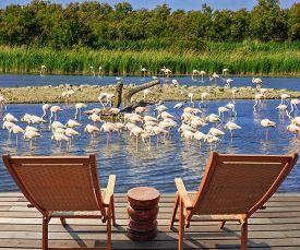 foto of pink flamingos  -   Park Camargue in delta of Rhone - JPG