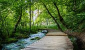 Boardwalk through the woods leading to Galovac Waterfall in Galovac Waterfall in Plitvice Lakes Nati poster