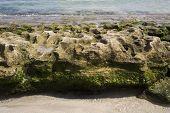 Bumpy Rock At Los Gatos Beach poster