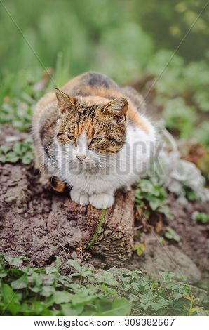poster of Cat In The Summer Garden