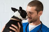 Young vet playing with boston terrier at clinic. Smiling veterinarian with stethoscope loving little poster