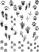 stock photo of bear tracks  - Various Black and White Grunge Animal Tracks - JPG