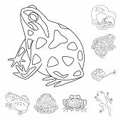Vector Illustration Of Amphibian And Animal Logo. Collection Of Amphibian And Nature Vector Icon For poster