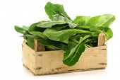 picture of ipomoea  - chinese spinach  - JPG