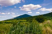 Countryside Agricultural Landscape. Country Road Through Vineyards. Countryside Landscape. Countrysi poster