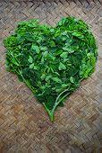 Moringo Tree Leaves poster