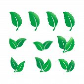 Set Of Green Leaf Icon Vector Isolated On White Background, Green Leaf Vector Icon Collection. Green poster