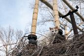 Street Cat On Dry Branches. Small Street Cat White With Red Ears. poster