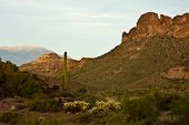 image of superstition mountains  - The cliffs cacti and mountains of Arizona - JPG