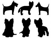 stock photo of yorkshire terrier  - Small dog silhouettes   - JPG