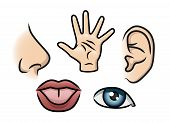 picture of sensory perception  - A cartoon illustration depicting the 5 senses - JPG