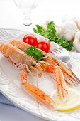 stock photo of norway lobster  - norwey lobster with tomatoes and lemon on dish - JPG
