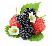 Strawberry and blackberry fruits. Isolated on white background
