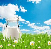 Milk jug full of milk in grass with blooming chamomiles. Blue sky with clouds on background