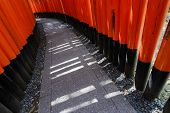 foto of inari  - Light and shadow of thousands of Torii - JPG