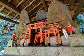 foto of inari  - Stone fox  - JPG