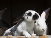 stock photo of husbandry  - group family farm rabbits in cage husbandry animal background