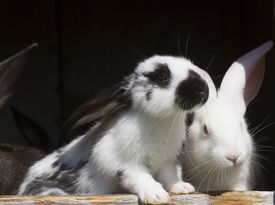 picture of husbandry  - group family farm rabbits in cage husbandry animal background [[** Note: Shallow depth of field] ** Note: Soft Focus at 100%, best at smaller sizes - JPG