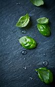 image of slating  - Fresh basil leaves on black slate - JPG