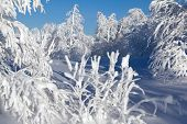 image of ural mountains  - Winter snow - JPG