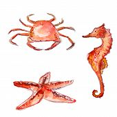 picture of creatures  - Hand drawn watercolor sea creatures - JPG