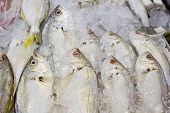 pic of mullet  - variety of fresh fish seafood in market closeup background - JPG