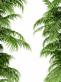 picture of tropical plants  - tropical plant fernleaf hedge bamboo branches on white background - JPG