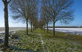 stock photo of row trees  - Row of trees along a snowy field in winter - JPG