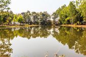 picture of eucalyptus trees  - Large pond in early spring with Eucalyptus trees and reflections - JPG