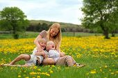 pic of tickle  - A happy young mother is relaxing in a meadow of dandelion flowers with her two children laughing tickling and playing - JPG