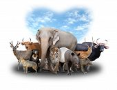 picture of herbivore animal  - group of asia animals with heart shape blue sky on white background - JPG