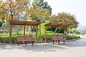 pic of pergola  - Closeup view of Rustic pergolas with benches under blossoming trees - JPG