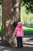 picture of crusher  - Toddler girl is looking high up to big old pine tree with huge trunk - JPG