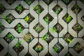 picture of weed  - An unusual pattern of stone or oddly shaped brickwork with many weeds growing - JPG