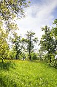 stock photo of bavaria  - Image of grass and trees on the Michelsberg in Bamberg Bavaria Germany - JPG