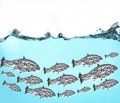 picture of school fish  - Fish school under water - JPG