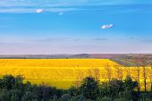 picture of rap  - raps and ground fields and forest colorful landscape - JPG